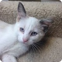 Adopt A Pet :: Jane - Bridgeton, MO