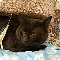 Adopt A Pet :: Keegan - Palmdale, CA