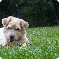 Adopt A Pet :: Squiggy - Weeki Wachee, FL