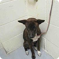 Adopt A Pet :: A277755 - Conroe, TX