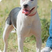 Adopt A Pet :: ABBY - Poway, CA