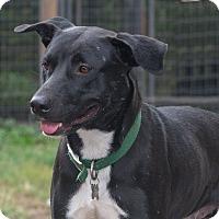 Adopt A Pet :: Pancake - Elmwood Park, NJ