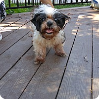 Adopt A Pet :: Rosie - Fallston, MD