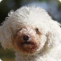 Adopt A Pet :: BOO - Ile-Perrot, QC