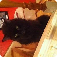 Adopt A Pet :: Skandal - Glendale, AZ