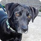 Adopt A Pet :: Boomer - NEW VIDEO