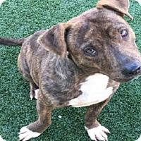 Adopt A Pet :: KENNY - Texas City, TX
