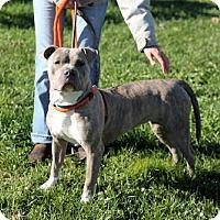 Adopt A Pet :: Cosinera - Manahawkin, NJ