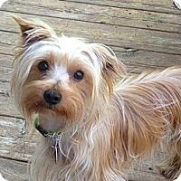 Adopt A Pet :: Coco - Rigaud, QC