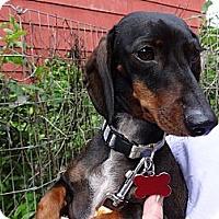 Adopt A Pet :: HANDSOME - Portland, OR