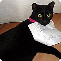 Adopt A Pet :: PJ - Alexandria, VA