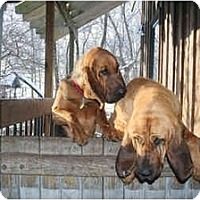 Adopt A Pet :: Bradley - Georgetown, KY