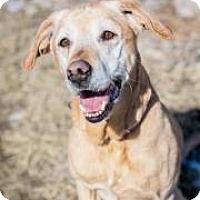 Adopt A Pet :: Greta - Cheyenne, WY