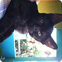 Adopt A Pet :: Vigo - Santa Monica, CA