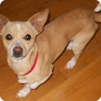 Adopt A Pet :: Jeremy - dewey, AZ