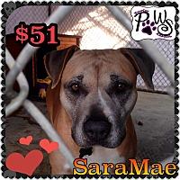 Adopt A Pet :: SaraMae - Fowler, CA