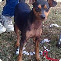 Adopt A Pet :: Candee - Nashville, TN
