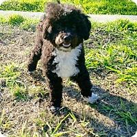 Adopt A Pet :: Harley - Encino, CA