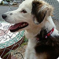 Adopt A Pet :: Niya - Meridian, ID
