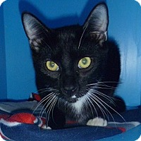 Adopt A Pet :: Curley - Hamburg, NY