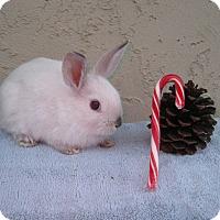Adopt A Pet :: Sugar - Bonita, CA