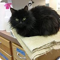 Adopt A Pet :: Mahoney - Byron Center, MI