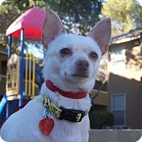 Adopt A Pet :: Cowboy 2 - Las Vegas, NV
