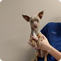 Adopt A Pet :: Slinky - Oviedo, FL