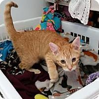 Adopt A Pet :: Elena - Chippewa Falls, WI