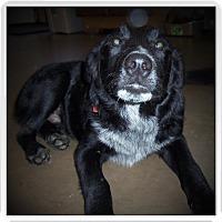 Adopt A Pet :: JACK - Medford, WI