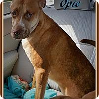 Adopt A Pet :: Opie - Ahoskie, NC