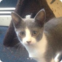 Adopt A Pet :: Zeus - Trevose, PA