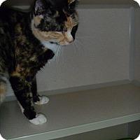 Adopt A Pet :: Ally - Hamburg, NY