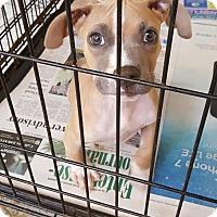 Adopt A Pet :: Oscar - Brookhaven, MS