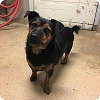Adopt A Pet :: Jaxon - Fargo, ND