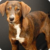 Adopt A Pet :: Yams - Newland, NC