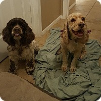 Adopt A Pet :: Spots - Scottsdale, AZ