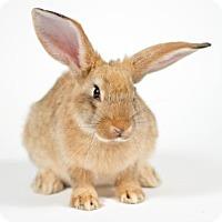 Adopt A Pet :: Zoe - Kingston, ON