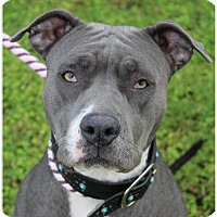 Adopt A Pet :: LINDSAY:Low fee/altered - Red Bluff, CA
