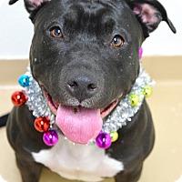 Adopt A Pet :: Hope - Dublin, CA