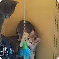 Adopt A Pet :: Cali - Encinitas, CA