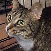 Adopt A Pet :: Buttercup (B-Cup) - Ortonville, MI