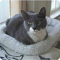 Adopt A Pet :: Libby - Colmar, PA