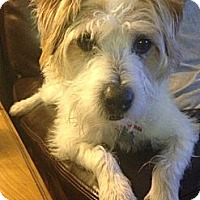 Adopt A Pet :: Cinch in Houston - Houston, TX
