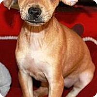 Adopt A Pet :: Sprout - Gilbert, AZ