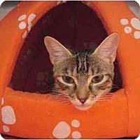 Adopt A Pet :: Georgina - The Colony, TX