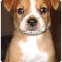 Adopt A Pet :: Boone - Mesa, AZ