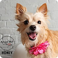Adopt A Pet :: Honey-adoption pending - Omaha, NE