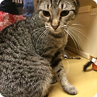 Adopt A Pet :: Noodles - Monroe, GA