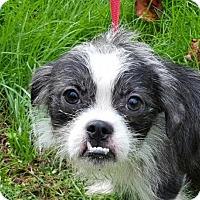 Adopt A Pet :: Ezra - Manhattan, NY